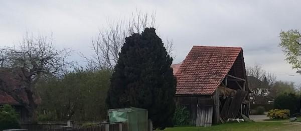 Stadel Altenmünster