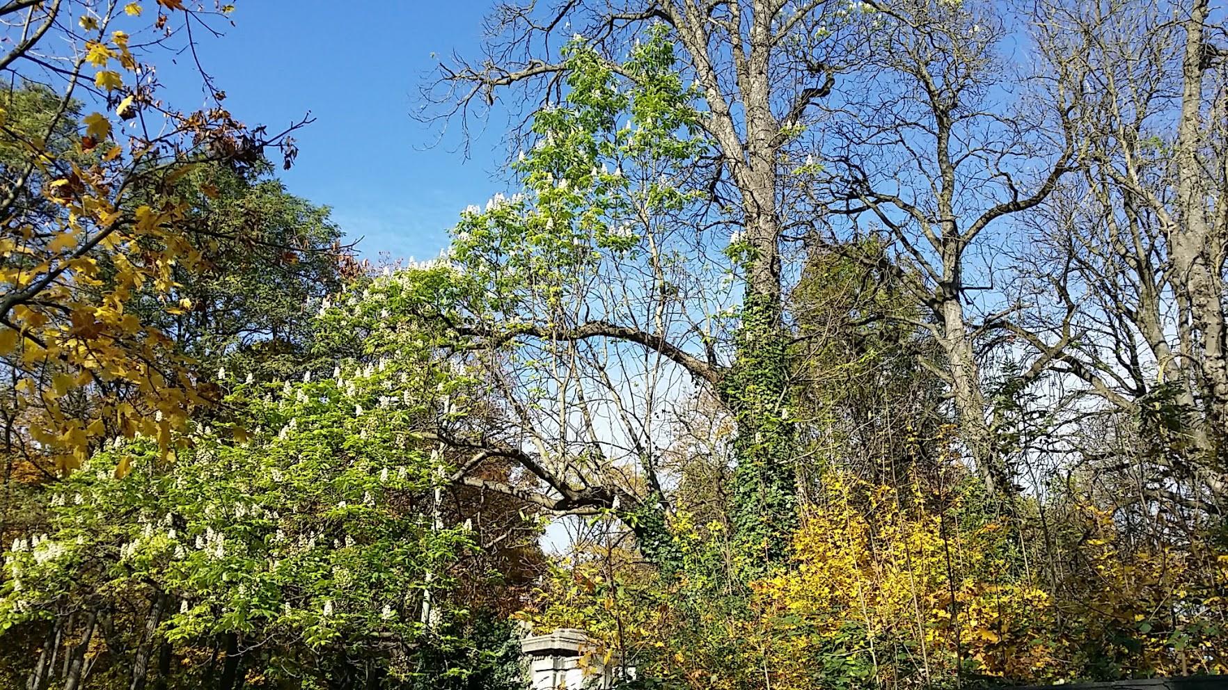 Kastanienblüte oktober